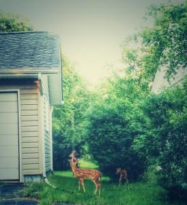 gr8twhitenowhere deer outhouse