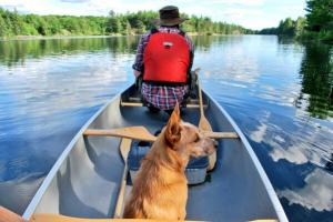 paddle in canoe dog